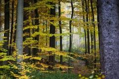 Herbst im Sauerland 10