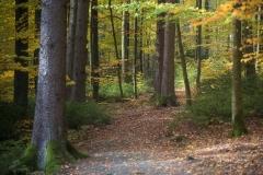 Herbst im Sauerland 11