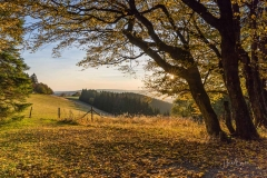 Sauerland-Herbst-44