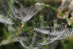 Spinnenetz-im-Morgentau