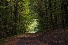 Hoheleye-Herbst-2021-03