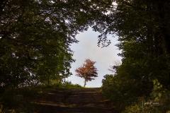 Hoheleye-Herbst-2021-13