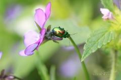 insekten-009