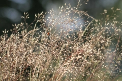 Marienkäfer im Gras