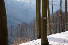 Kahler Asten-Steig Winter 5