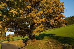 Antoniuseiche-Herbst-1