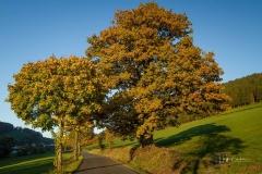 Antoniuseiche-Herbst-2