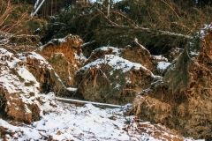Wenige Tage nach Kyrill - 24.01.2007