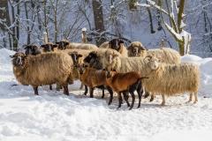Lengenbeck im Winter 21
