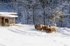 Lengenbeck im Winter 22