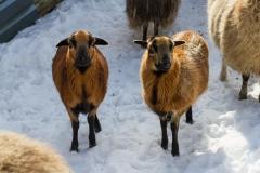 Lengenbeck im Winter 24