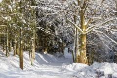 Lengenbeck im Winter 25