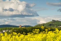 Rapsfeld bei Laer mit Blick auf Meschede und Abtei Königsmünster 1