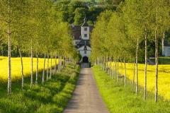 Birkenallee oberhalb von Schloss Laer 3