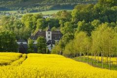 Blick über Rapsfeld auf Schloss Laer 1