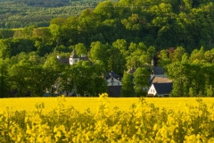 Blick über Rapsfeld auf Schloss Laer 2