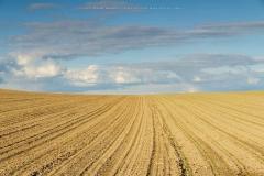 Feld bei Eslohe-Büenfeld