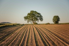 Baum bei Eslohe-Büenfeld 1