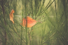 Herbstblatt-im-Ginster