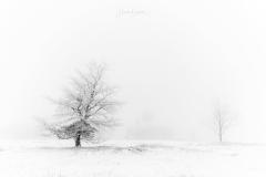 Nebel-im-Winter-1