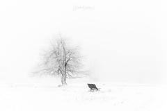 Nebel-im-Winter-2