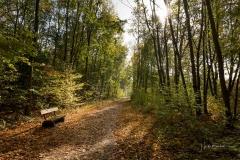 Möhnesee-Herbst-05