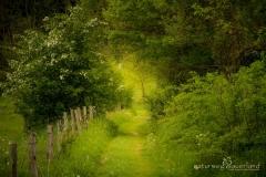 Naturweg in Oberhundem