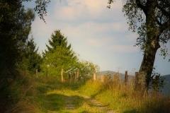 Naturweg rund ums Schmanteltal in Winterberg
