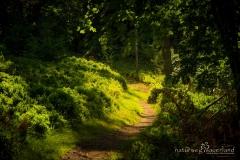 Naturweg am Kahle Pön bei Willingen