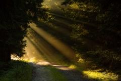 Naturweg im Morgenlicht