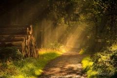 Naturweg am Nordhang des Kahlen Asten