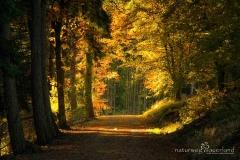 Naturweg durch einen Herbstwald