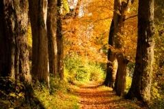 Naturweg im Bad Berleburger Schlosspark