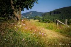 Naturweg in Winterberg-Grönebach