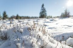 Niedersfelder Hochheide Winter 18
