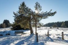 Niedersfelder Hochheide Winter 19