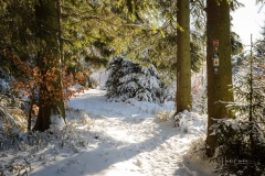 Niedersfelder Hochheide Winter 24