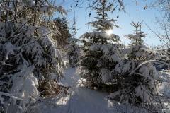 Niedersfelder Hochheide Winter 25