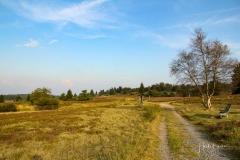 Wanderweg in Richtung Ettelsberg