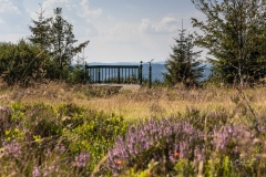 Niedersfelder-Hochheide-So2020-005