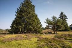 Niedersfelder-Hochheide-So2020-063