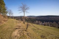 Nordenauer-Osterglockenweg-20