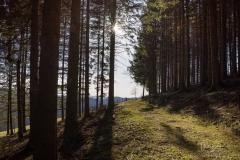 Nordenauer-Osterglockenweg-21