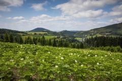 Oberkirchen-Sommer-2021-12