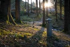 Waldskulpturenweg-Hexenplatz-Fruehjahr2021-1