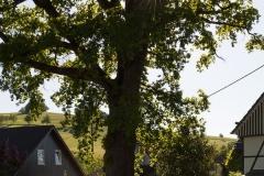 Fotoroute-Oberhenneborn-03