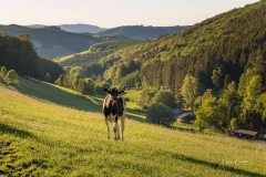 Fotoroute-Oberhenneborn-24