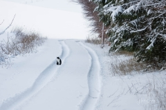 Oberhenneborn im Winter 03
