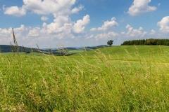 Oberhenneborner-Rundweg-Frühjahr-8