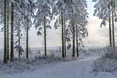 nordhang-kahlerasten-09